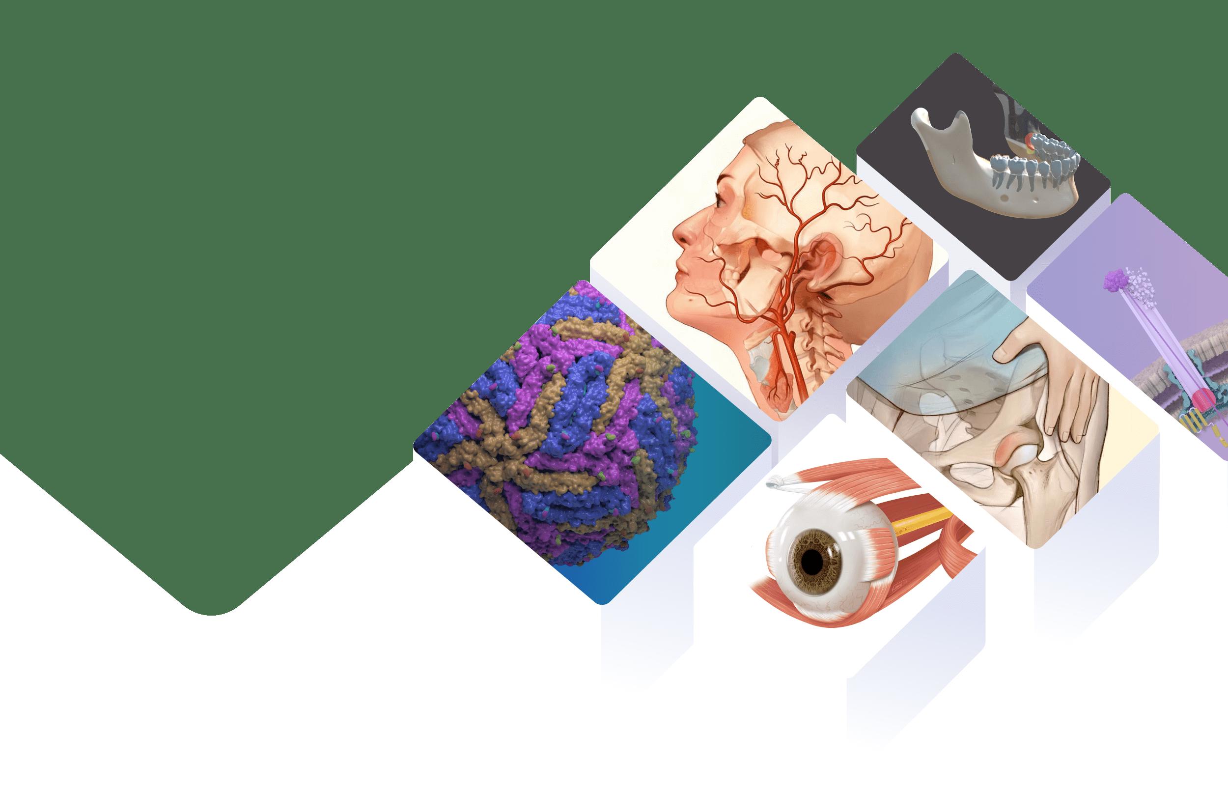 BioHues Digital